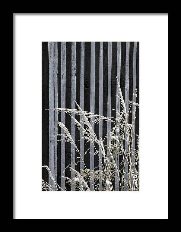 Nature Framed Print featuring the photograph The Grass And Fence by Viktor Savchenko