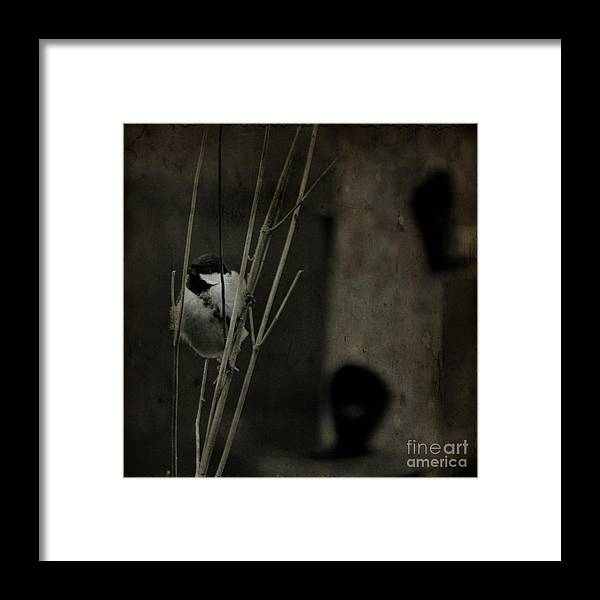 Tit Framed Print featuring the photograph The Great Tit by Angel Ciesniarska