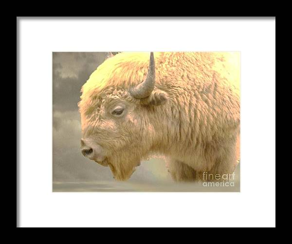 Buffalo Framed Print featuring the photograph The Great White Buffalo by Marylyn Wiedmaier