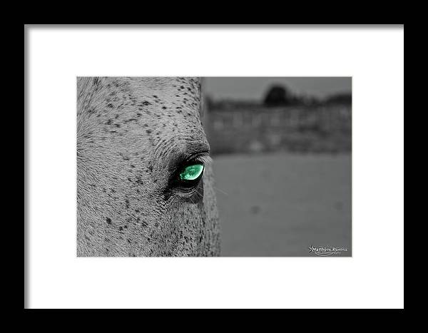 Framed Print featuring the photograph The Green Eyed Horse by Matthieu Russell