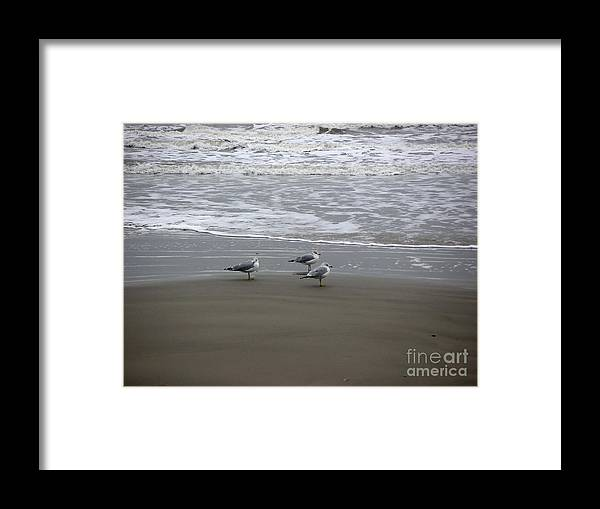 Nature Framed Print featuring the photograph The Gulf In Shades Of Gray - Formation by Lucyna A M Green