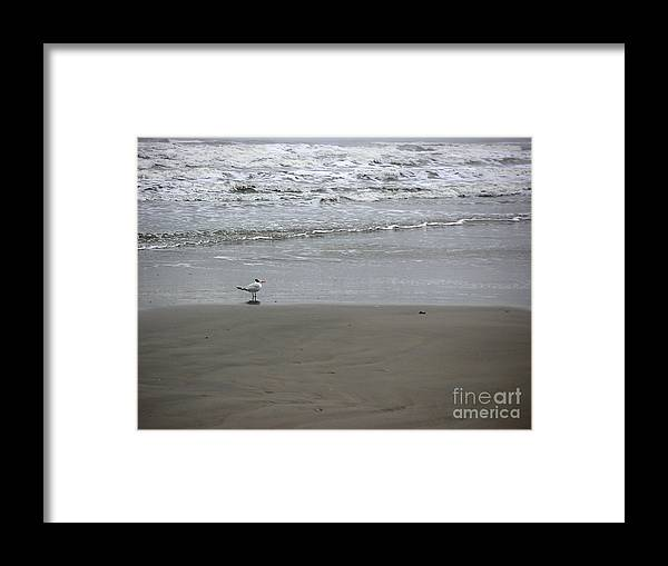 Nature Framed Print featuring the photograph The Gulf In Shades Of Gray - Seaing by Lucyna A M Green
