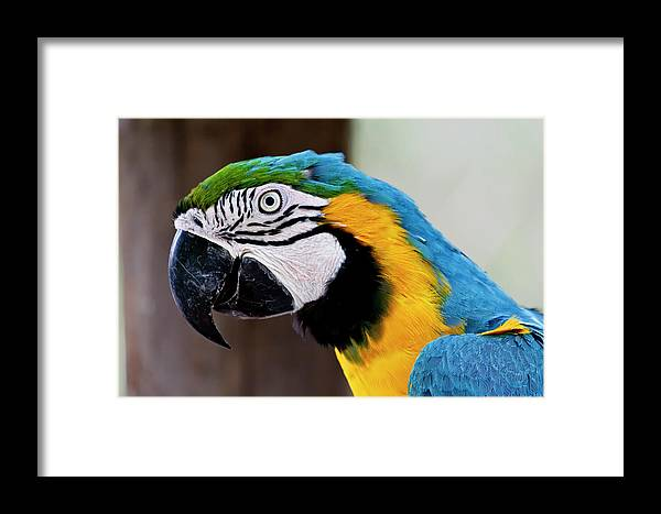 Macaw Framed Print featuring the photograph The Happy Macaw by Craig Tata