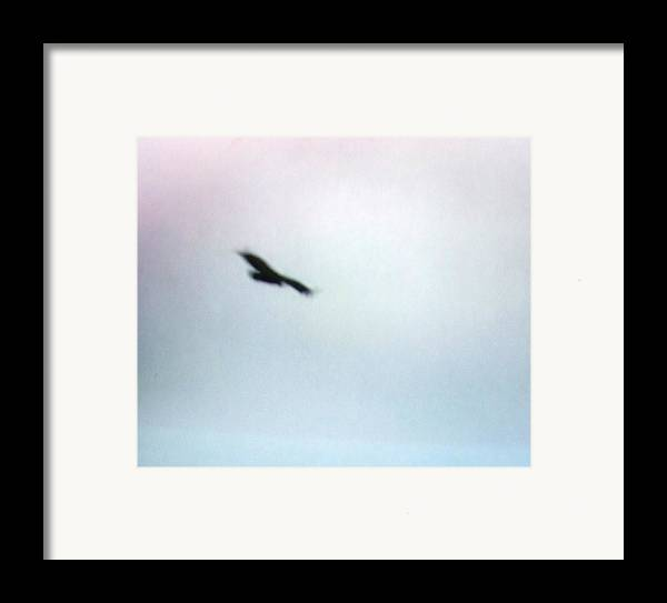 Hawk Framed Print featuring the photograph The Hawk by Rana Adamchick