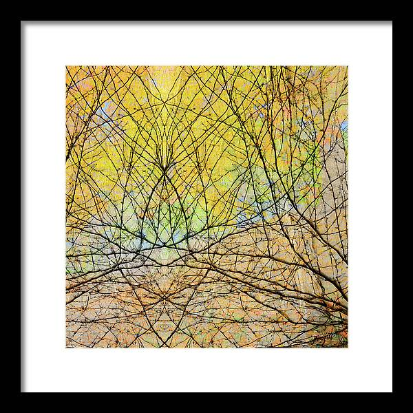Experimental Framed Print featuring the photograph The Hidden Forest by Michel Godts