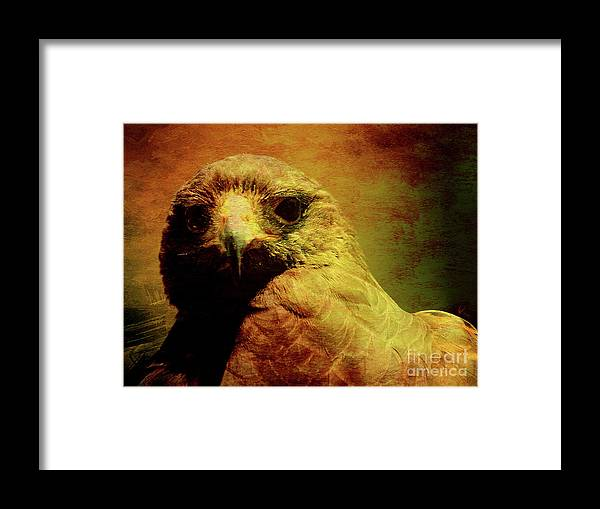 Red Tail Hawk Framed Print featuring the photograph The Hunter . Portrait Of A Hawk . Texture . 40d7877 by Wingsdomain Art and Photography