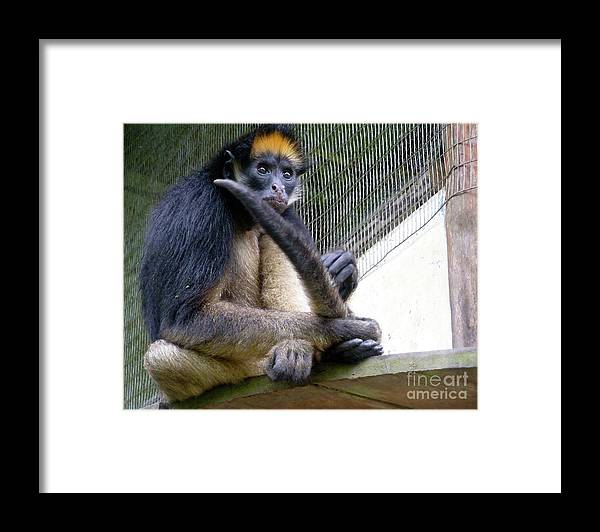 Ecuador Framed Print featuring the photograph The Intellect by Alisha Robertson