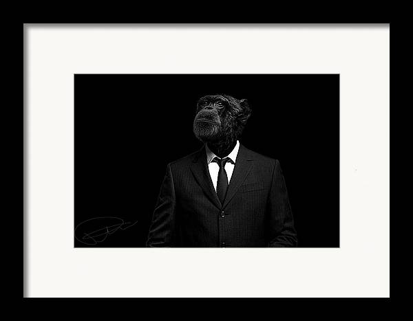 Chimpanzee Framed Print featuring the photograph The Interview by Paul Neville
