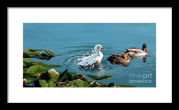 Ducks. Nature Framed Print featuring the painting The Intimidator by Michael Nowak