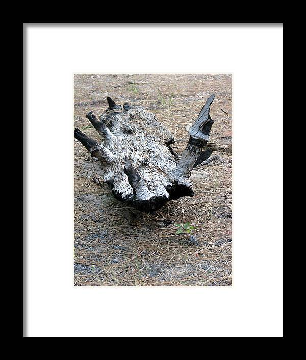 Inverted Alligator Framed Print featuring the photograph The Inverted Alligator by Chris Gudger