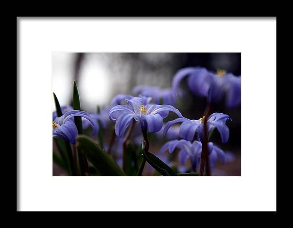 Spring Framed Print featuring the photograph The Joy Of Springtime by Laura Kinker