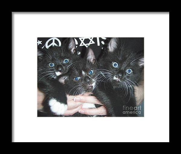 Kittens Framed Print featuring the photograph The Kittidiots by Kristine Nora