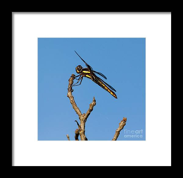Insect Framed Print featuring the photograph The Landing Pad by Robert Pearson