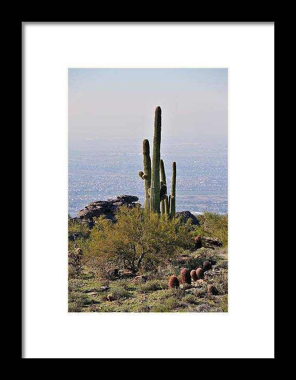 Arizona Framed Print featuring the photograph The Last Cactus by Tom Dowd