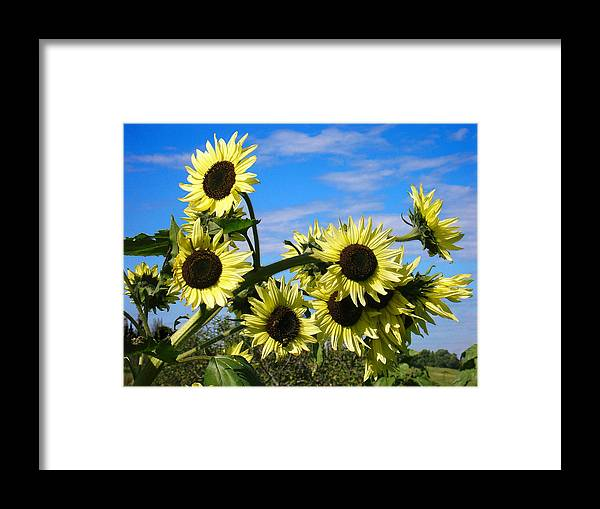 Flowers Framed Print featuring the photograph The Last of Summer by Steve Karol