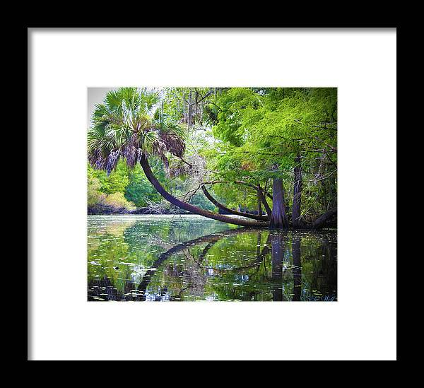 Hillsborough Framed Print featuring the photograph The Leaning Palm by Elie Wolf
