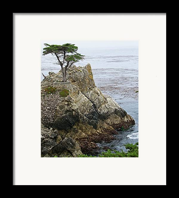 Lone Framed Print featuring the photograph The Lone Cypress - California by Brendan Reals