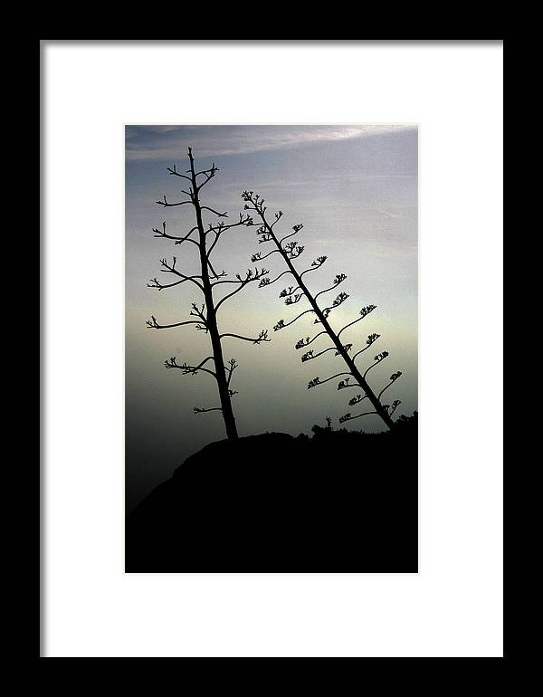 Branch Framed Print featuring the photograph The Lonely Couple by Jason Hochman