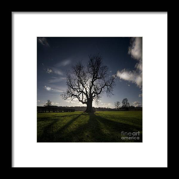 Oak Framed Print featuring the photograph The Lonely Tree by Angel Ciesniarska