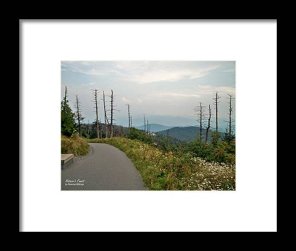 Mountains Framed Print featuring the photograph The Long Road by Maxine Billings