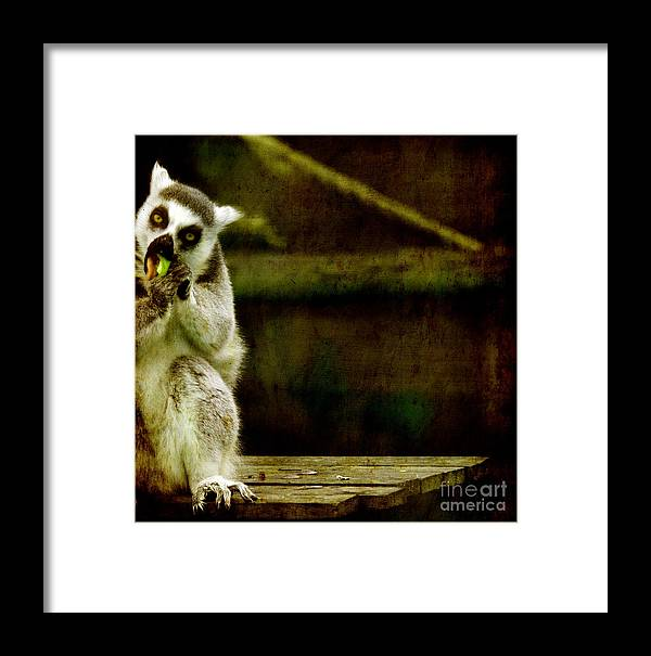 Lori Framed Print featuring the photograph The Lori by Angel Ciesniarska