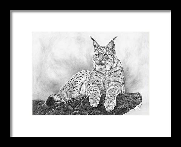 Lynx Framed Print featuring the drawing The Lynx 2017 Version by Iren Faerevaag