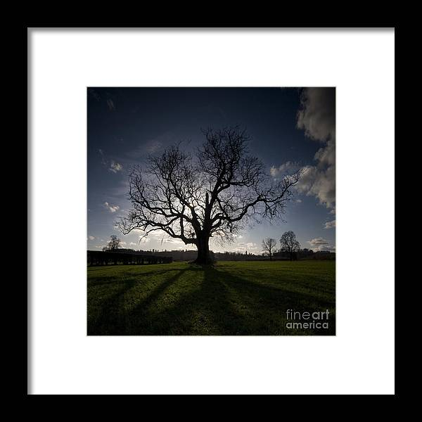 Oak Framed Print featuring the photograph The Mighty Tree by Angel Ciesniarska