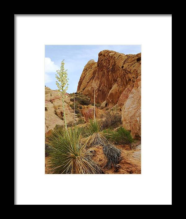Rocks Framed Print featuring the photograph The Mighty Yucca by Steve Ponting