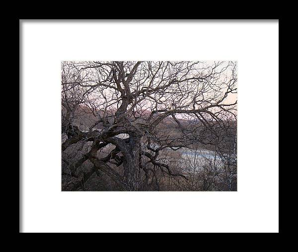 Pecan Tree Framed Print featuring the photograph The Mother Tree One by Ana Villaronga