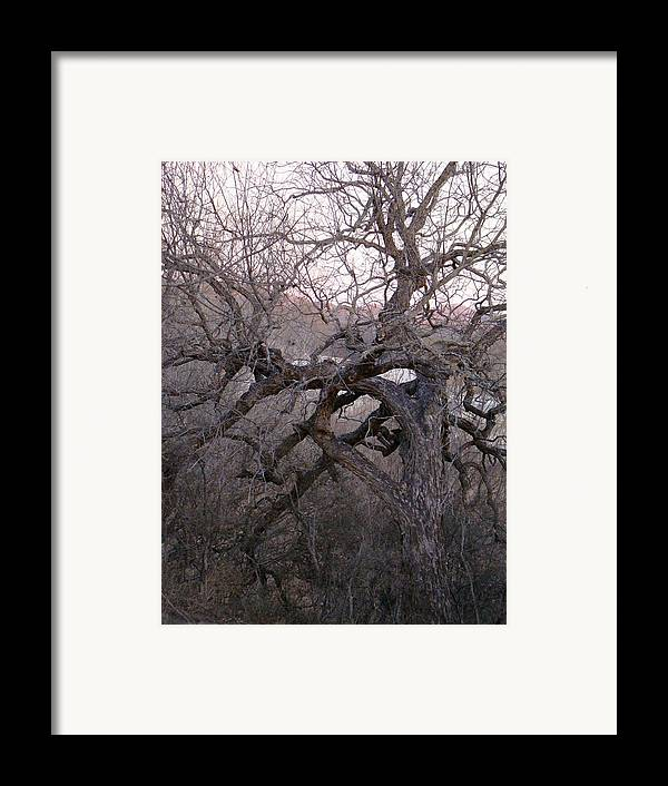 Pecan Tree Framed Print featuring the photograph The Mother Tree Two by Ana Villaronga