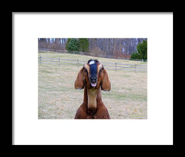 Animals Framed Print featuring the photograph The Name Is Billy... by Deborah Crew-Johnson