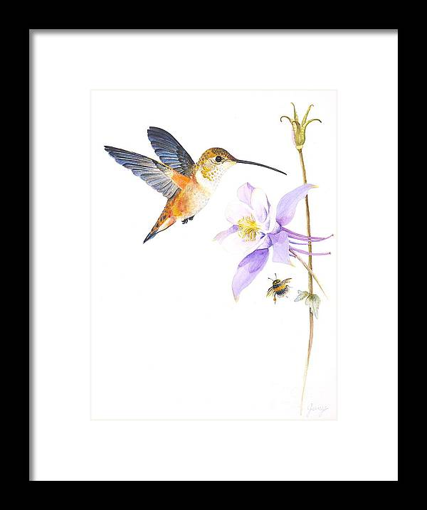 Hummingbird Framed Print featuring the painting The Nectar Hunt by Jany Schindler