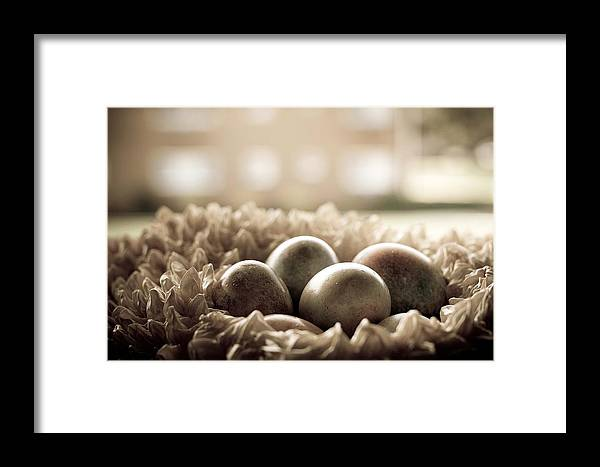Nest Framed Print featuring the photograph The Nest by Mandy Wiltse
