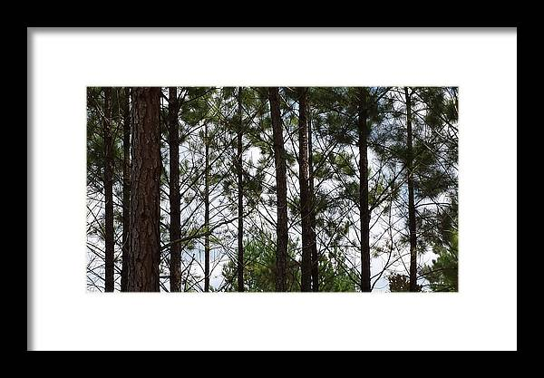 Trees Framed Print featuring the photograph The Network by Laura Martin