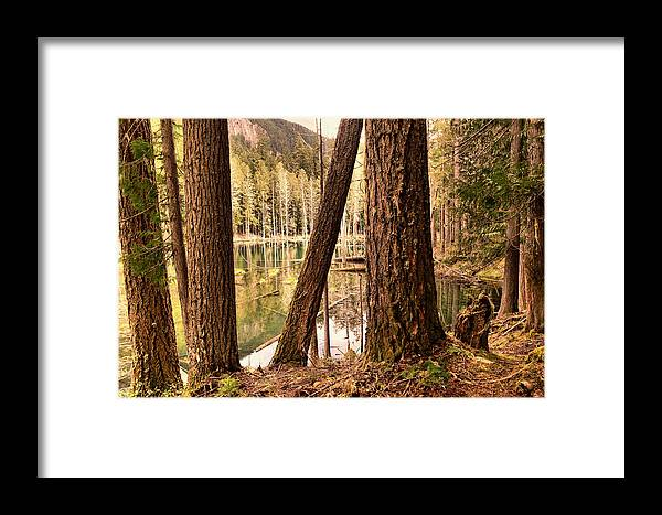 Forest Framed Print featuring the photograph The Not To Distant Shore by Jeff Swan
