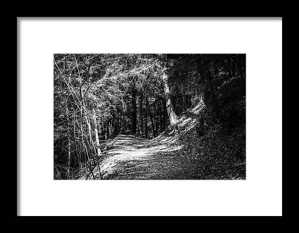 Trail Framed Print featuring the photograph The Old Logging Road by Shelley Smith