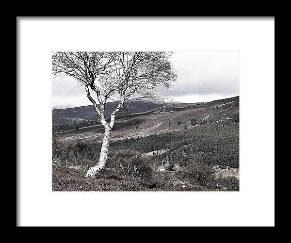 Tree Framed Print featuring the photograph The One by HweeYen Ong
