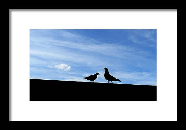 Pigeon Framed Print featuring the photograph The Opposite Of Love by Thomas Shanahan