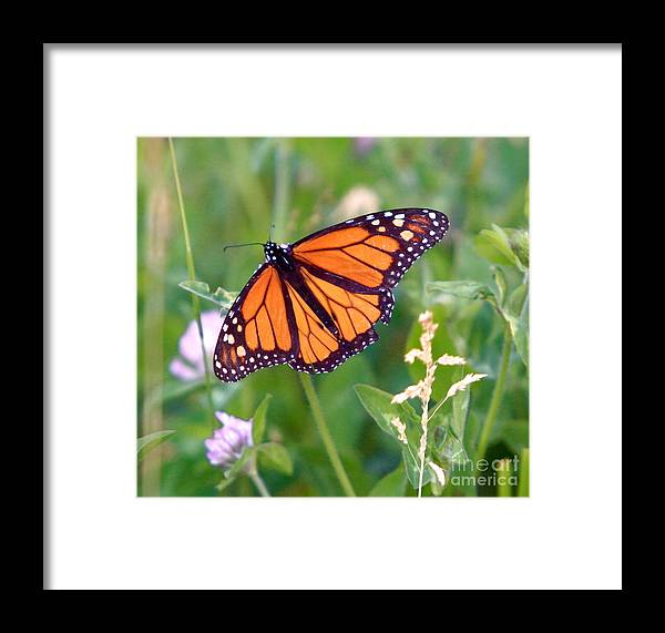 Butterfly Framed Print featuring the photograph The Orange Butterfly by Robert Pearson