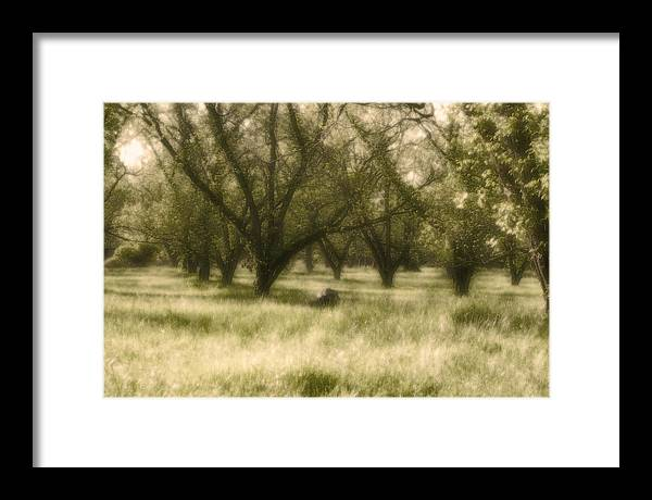 Landscape Framed Print featuring the photograph The Orchard by Ayesha Lakes