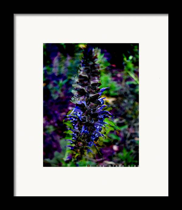 Flower Framed Print featuring the photograph The Other Side by Jonathan Ellis Keys