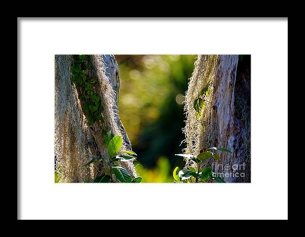 Spanish Moss Framed Print featuring the photograph The Other Side by Julie Adair