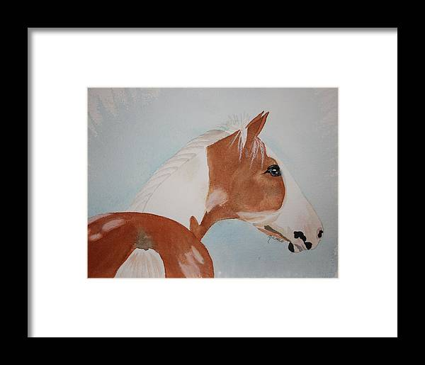 Horse Framed Print featuring the painting The Paint by Michele Turney