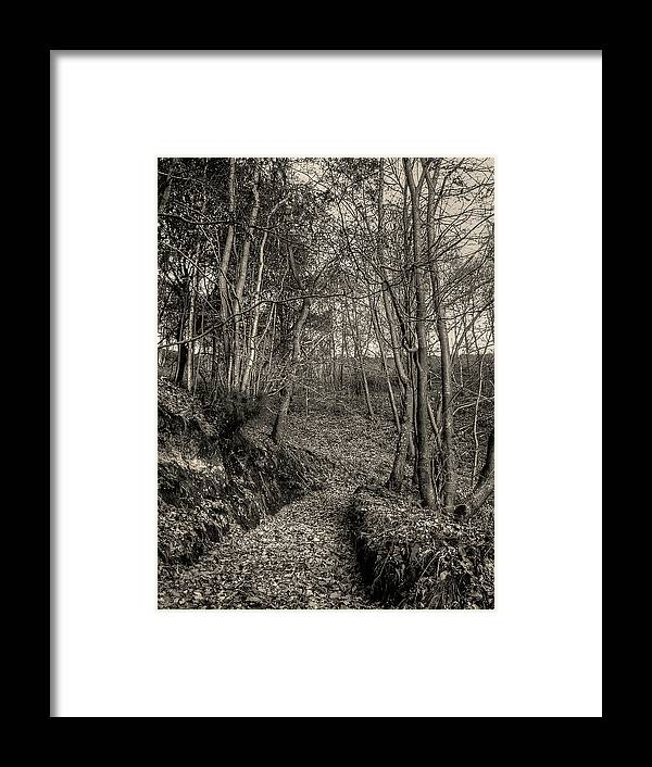 Nature Framed Print featuring the photograph The Path by Ignacio Leal Orozco