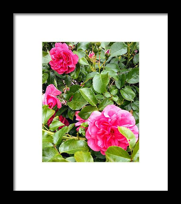 Botanical Flower's Nature Framed Print featuring the photograph The peaceful place 10 by Valerie Josi