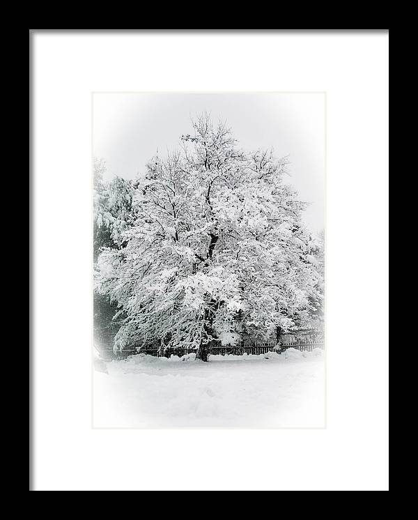 Tree Framed Print featuring the photograph The Pear Tree by Heather Hubbard
