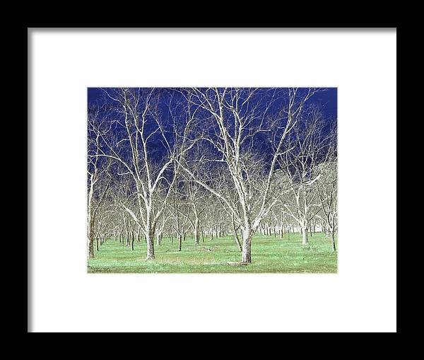 Pecan Framed Print featuring the photograph The Pecan Grove by Judy Waller