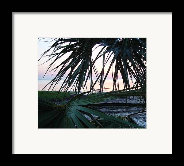 Palms Framed Print featuring the painting The Peeking Palms by Debbie May