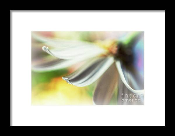 Petal Framed Print featuring the photograph The Petal II by Silvia Ganora