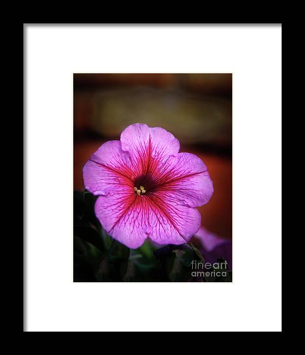 Nature Framed Print featuring the photograph The Petunia by Robert Bales